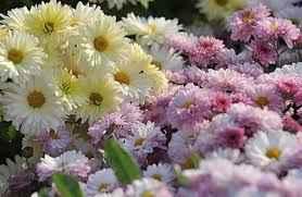 images - نکات مهم برای خرید گل ترحیم