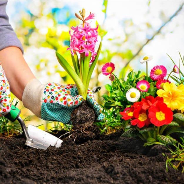 باغبانی بهشت زهرا | ساخت باغچه کنار مزار | آبیاری و نگهداری باغچه | کاشت گل و گیاه بهشت زهرا | کاشت درخت بهشت زهرا