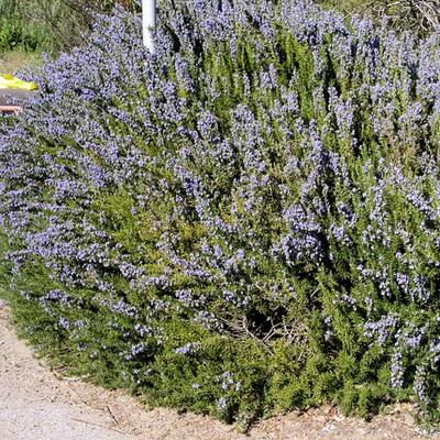 11 - گیاه و درخت مناسب آرامستان