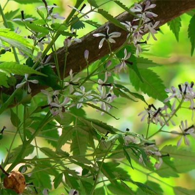 17 - گیاه و درخت مناسب آرامستان