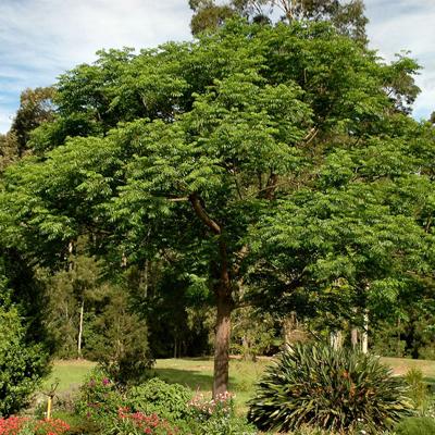 19 - گیاه و درخت مناسب آرامستان