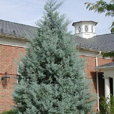 23 - گیاه و درخت مناسب آرامستان