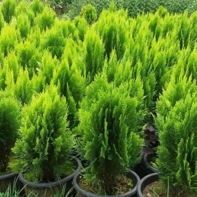 3 - گیاه و درخت مناسب آرامستان