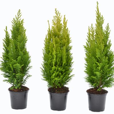 4 - گیاه و درخت مناسب آرامستان
