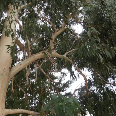 8 - گیاه و درخت مناسب آرامستان