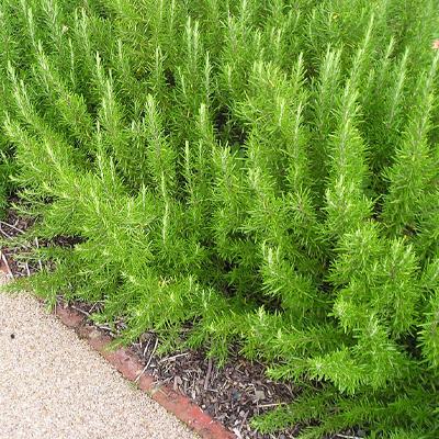 9 - گیاه و درخت مناسب آرامستان