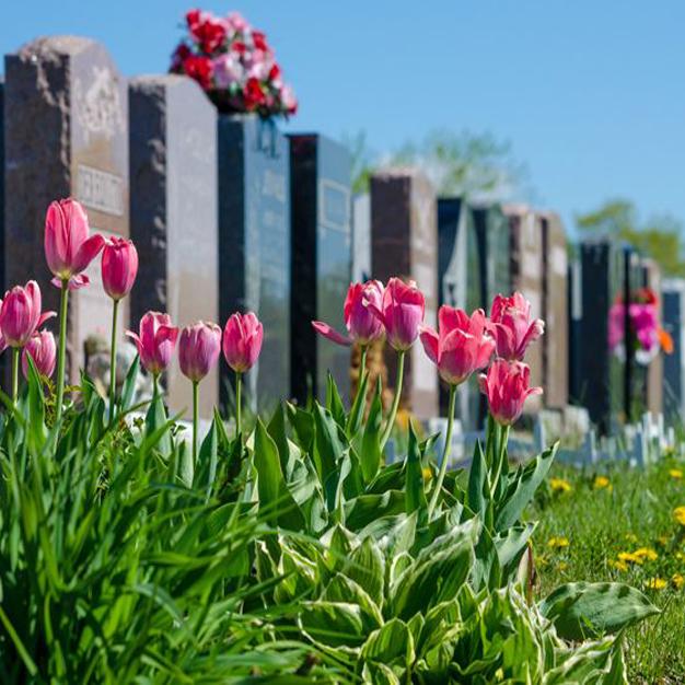 بهترین گل برای مزار | گیاهان مناسب بهشت زهرا | کاشتن درخت سر قبر | کاشت درخت بهشت زهرا | گل مناسب سر مزار